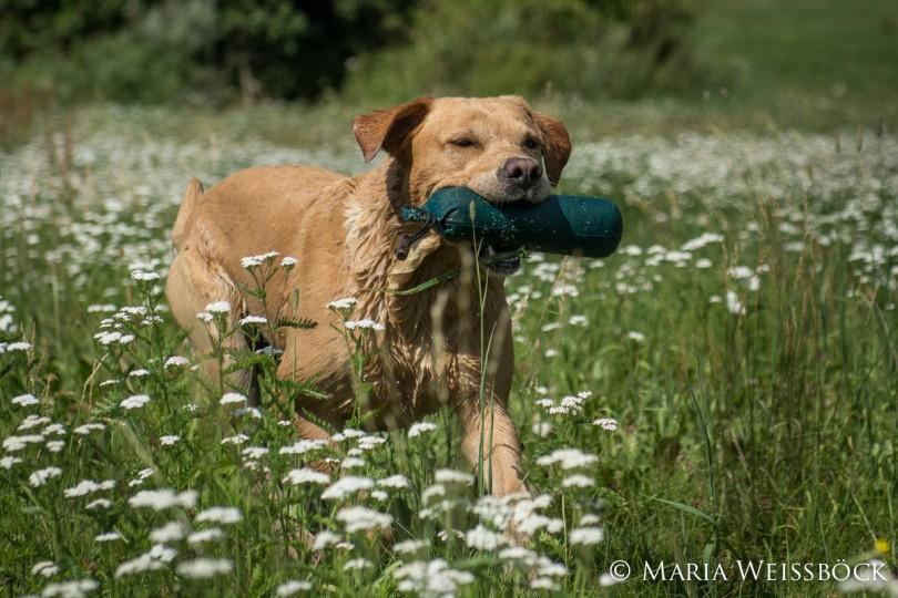 dummytrial2015-07-31budweis_copyright-maria-weissboeck0081