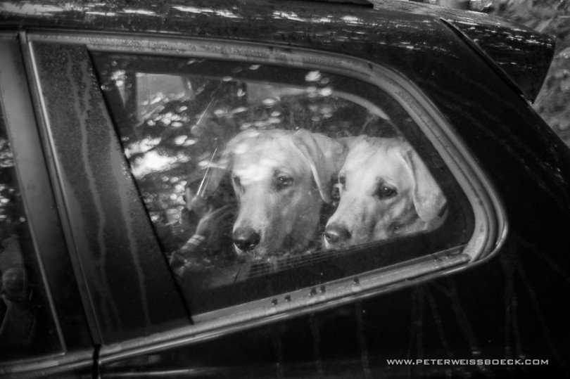 gundog_bad_aussee_2015_copyright_peter_weissboeck0019