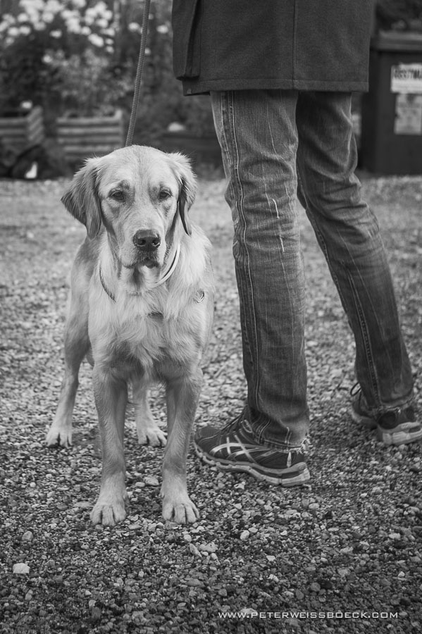 gundog_bad_aussee_2015_copyright_peter_weissboeck0026
