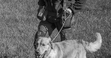 gundog_bad_aussee_2015_copyright_peter_weissboeck0034