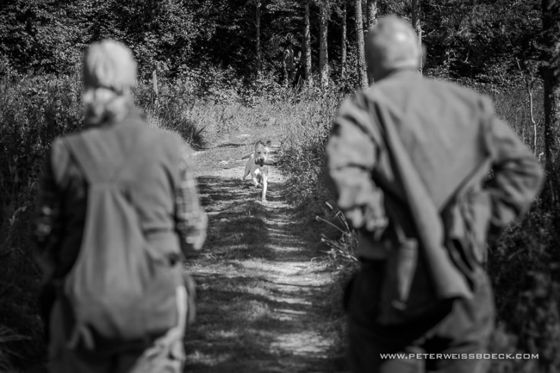 gundog_bad_aussee_2015_copyright_peter_weissboeck0043