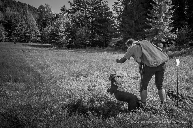 gundog_bad_aussee_2015_copyright_peter_weissboeck0049