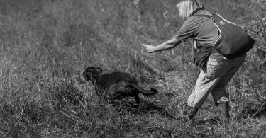 gundog_bad_aussee_2015_copyright_peter_weissboeck0055