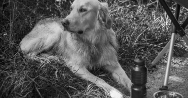 gundog_bad_aussee_2015_copyright_peter_weissboeck0057