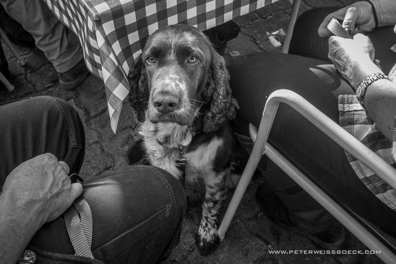 gundog_bad_aussee_2015_copyright_peter_weissboeck0060