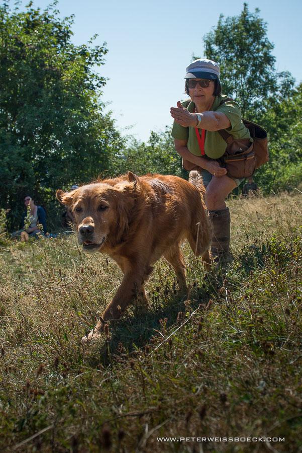 gundog_berschmeni_08.2015_copyright_peter_weissboeck0028