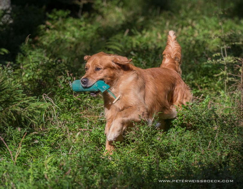 gundog_karlstift_2015_copyright_peter_weissboeck0008