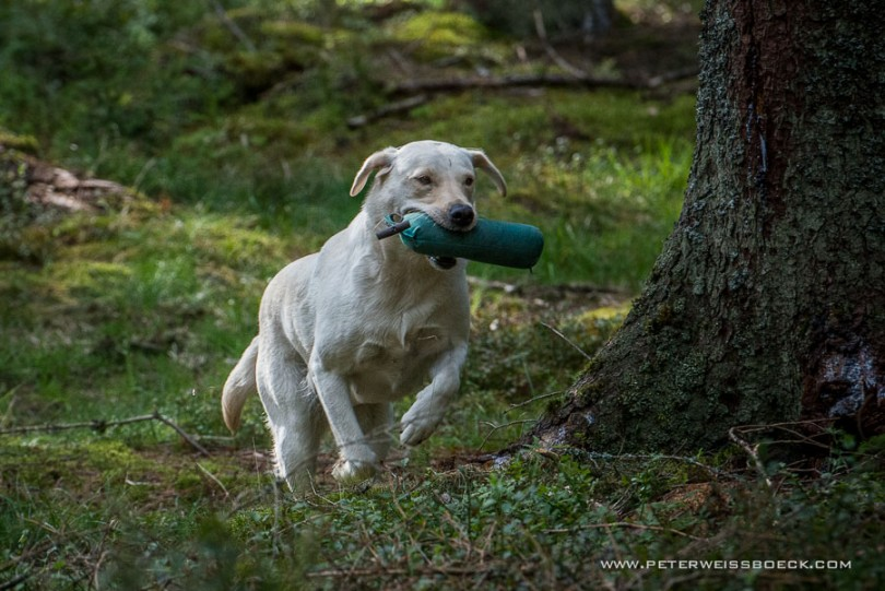 gundog_karlstift_2015_copyright_peter_weissboeck0016