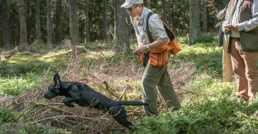 gundog_karlstift_2015_copyright_peter_weissboeck0036