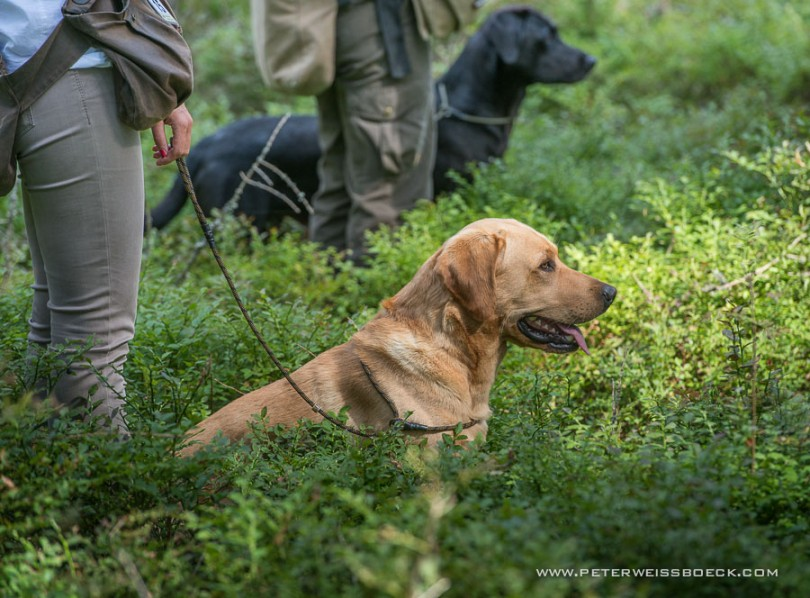 gundog_karlstift_2015_copyright_peter_weissboeck0040