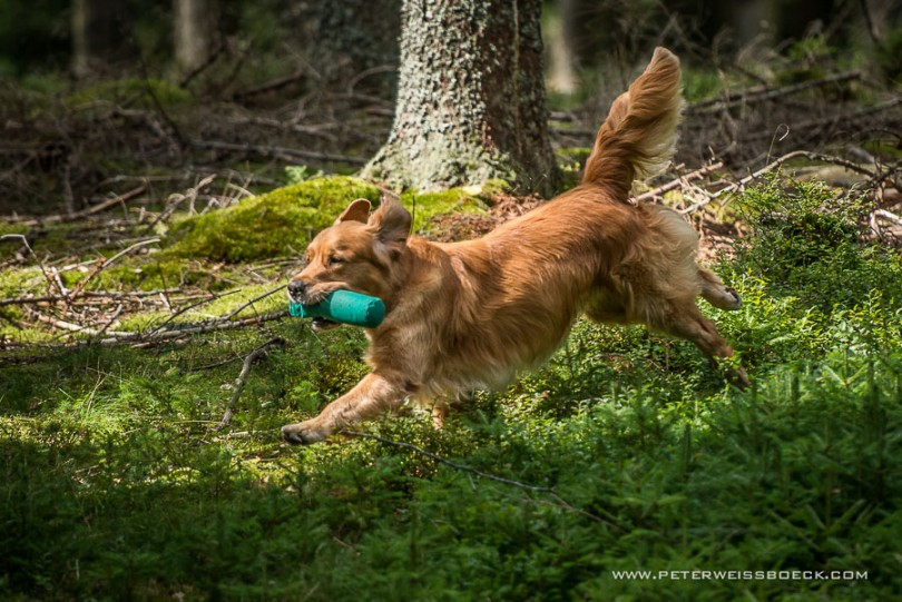 gundog_karlstift_2015_copyright_peter_weissboeck0056