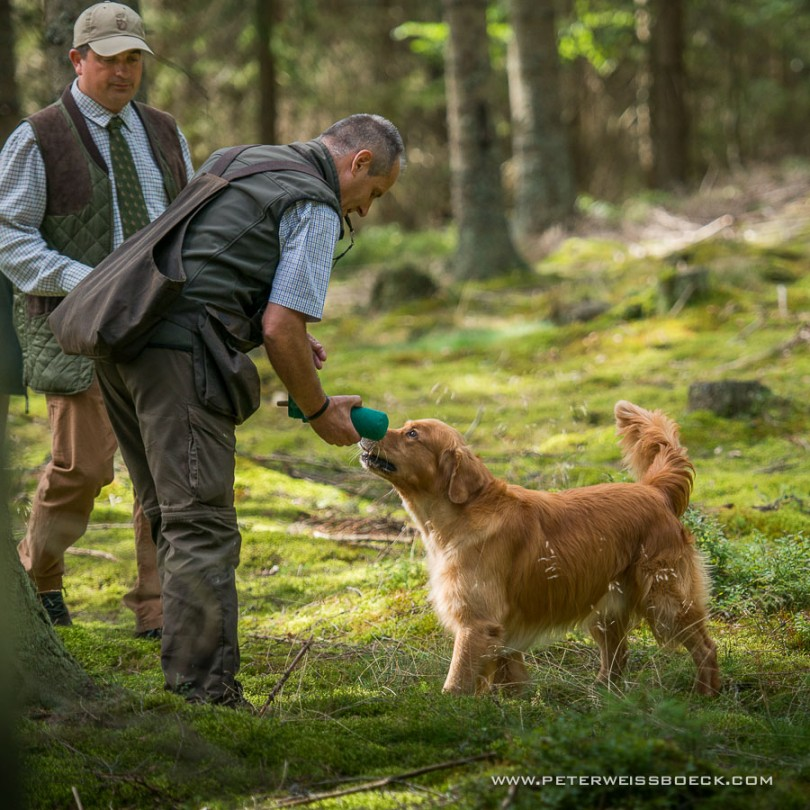 gundog_karlstift_2015_copyright_peter_weissboeck0057