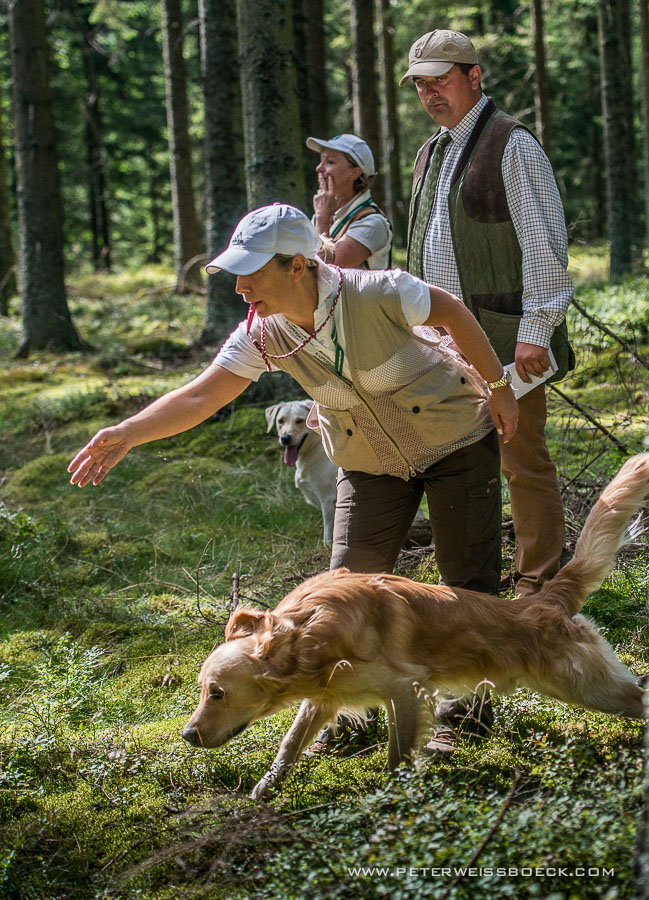 gundog_karlstift_2015_copyright_peter_weissboeck0061