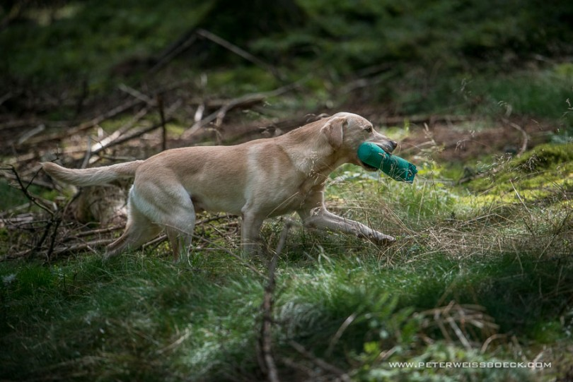 gundog_karlstift_2015_copyright_peter_weissboeck0099