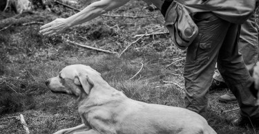 gundog_karlstift_2015_copyright_peter_weissboeck0106