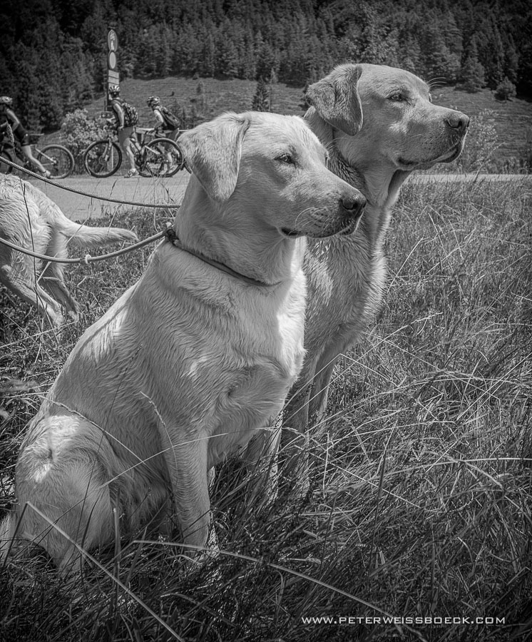 gundog_pillersee_2015_copyright_peter_weissboeck0013